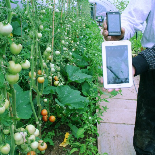 Tablets & Growing